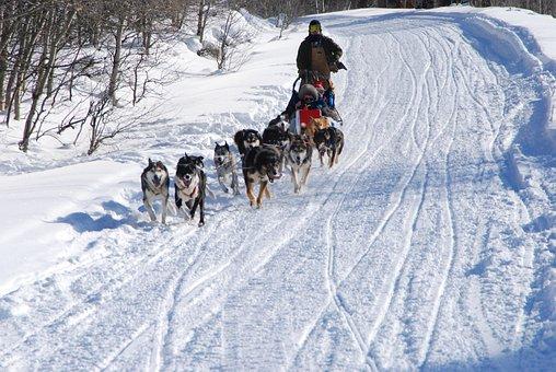200+ Free Sled Dog & Husky Images - Pixabay