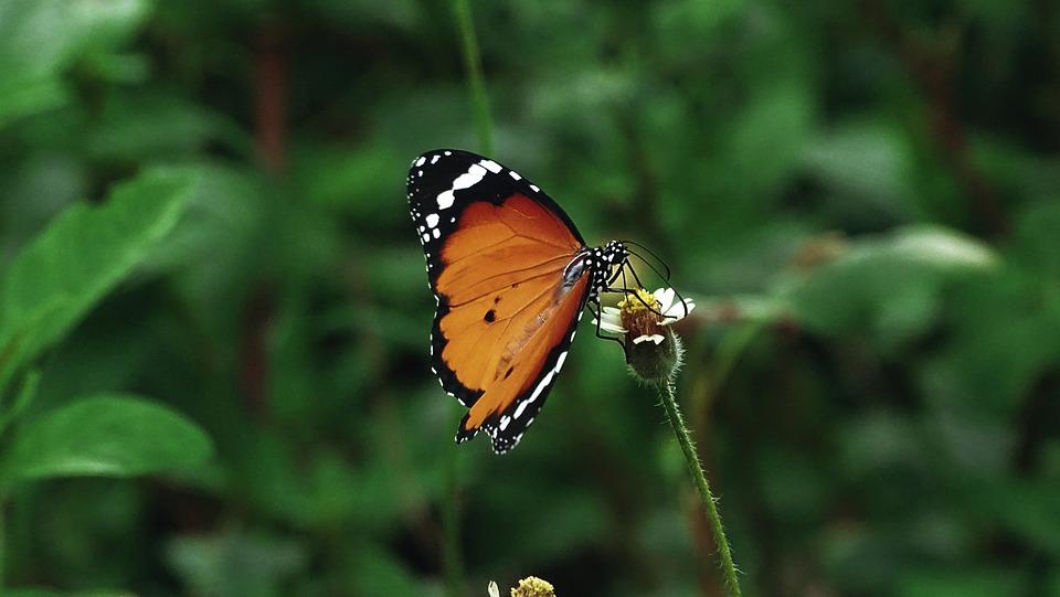 蝶 昆虫 オレンジ色 Pixabayの無料写真