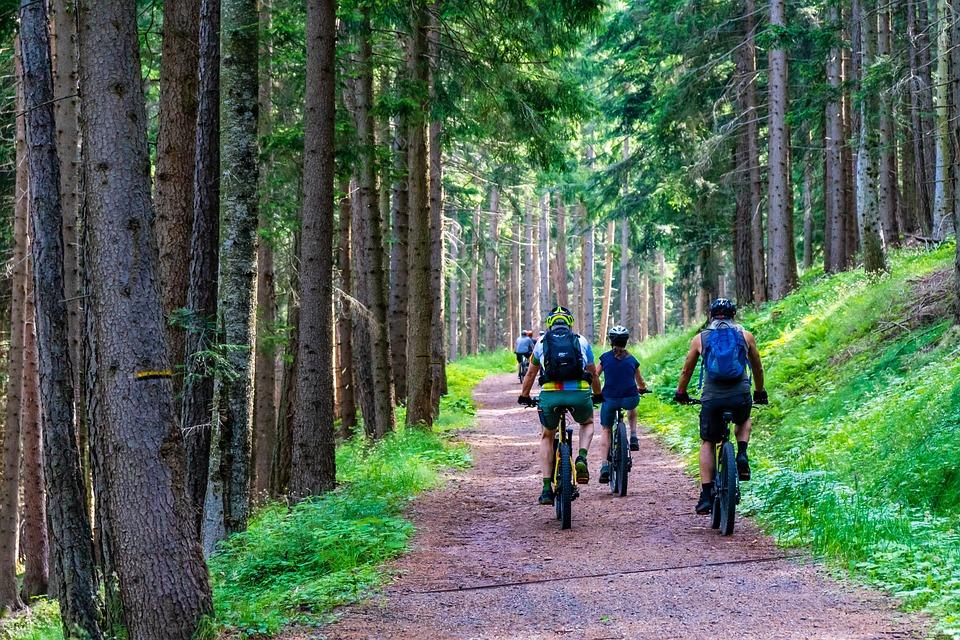 Les, Lesná Cesta, Horský Bicykel, E-Bike, E-Mtb