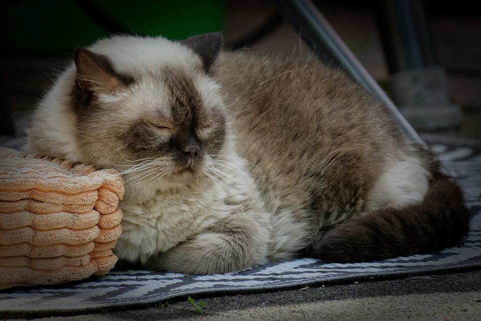 善盡飼主責任 寵物死亡應辦理除戶