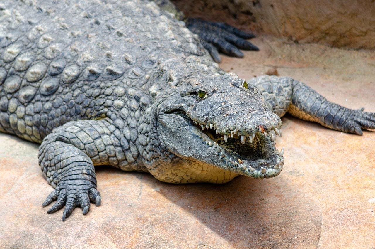 новые лоты эволюция крокодилов фото только