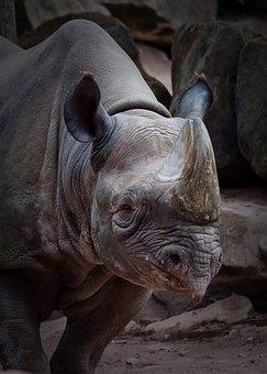 Rhino, Animal, Zoo, Africa, Animal World