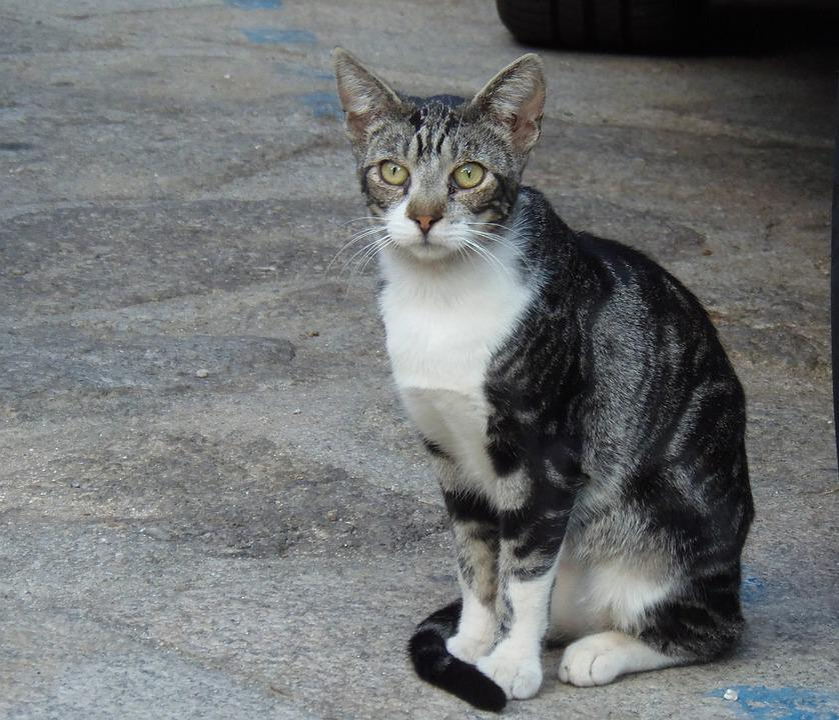 Africký kočička obrázek
