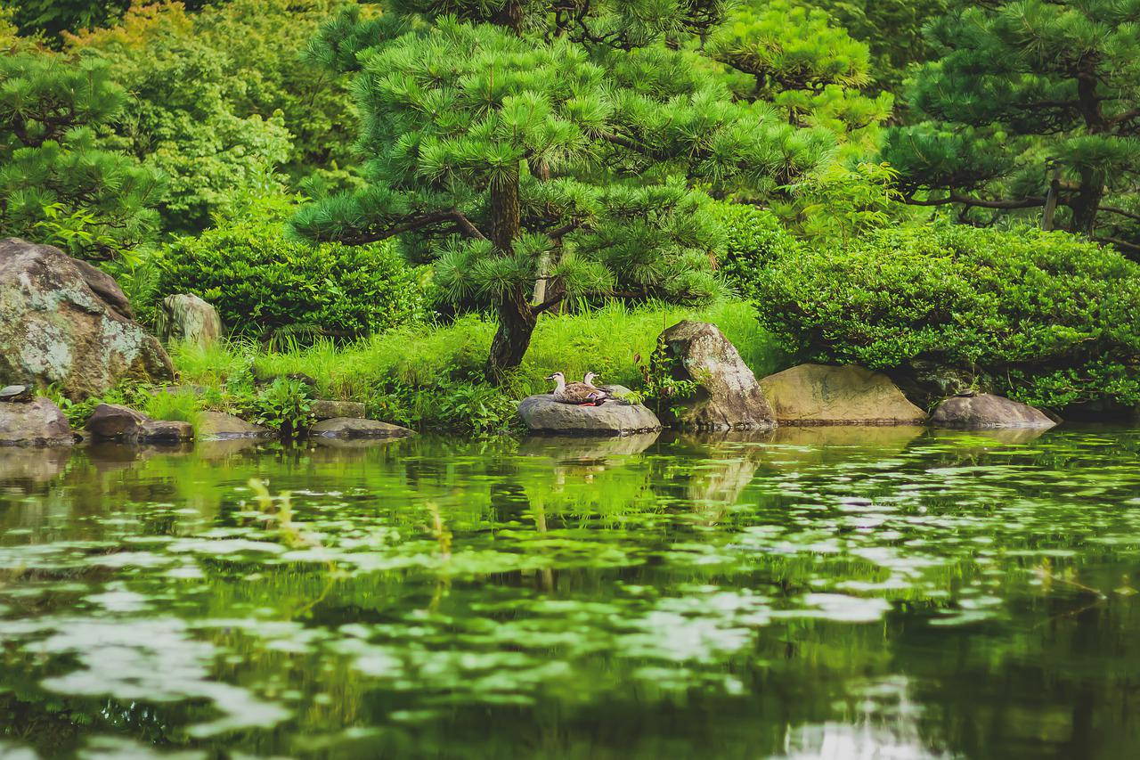 картинки природа пруд камни бамбук