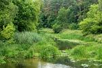 rzeka, wody, lato
