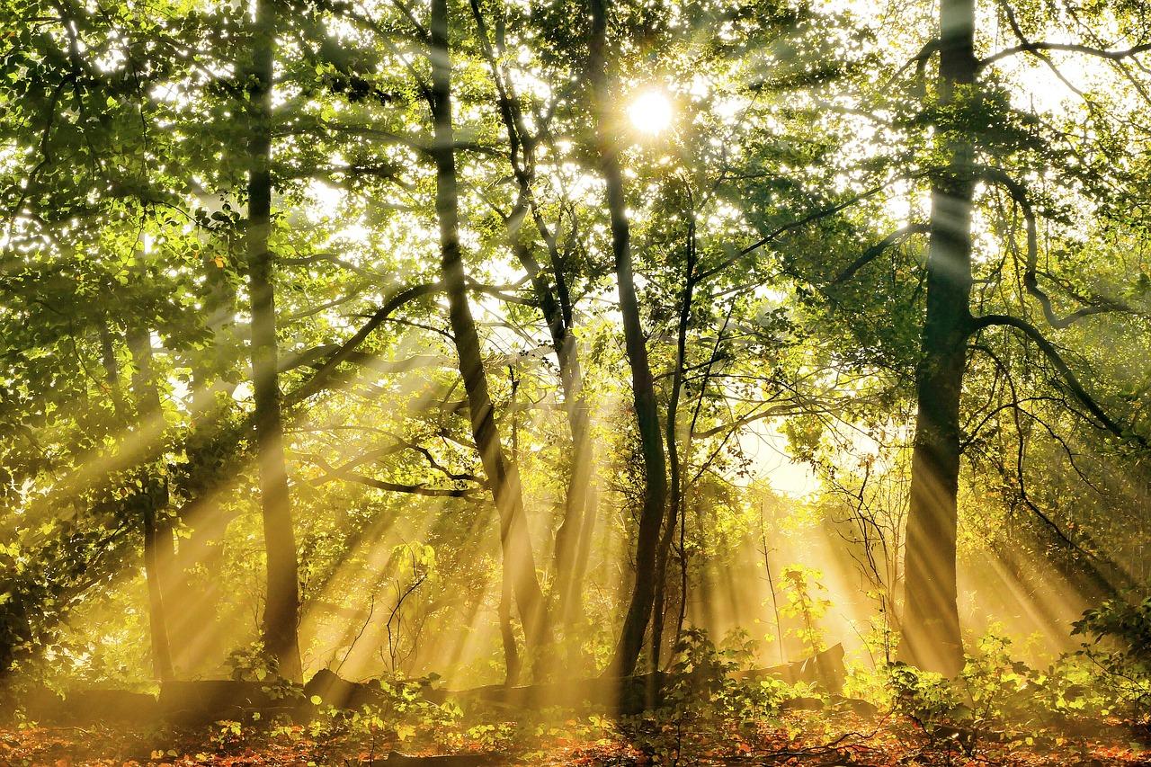 известны своими лучи солнца в лесу картинки и фото советского