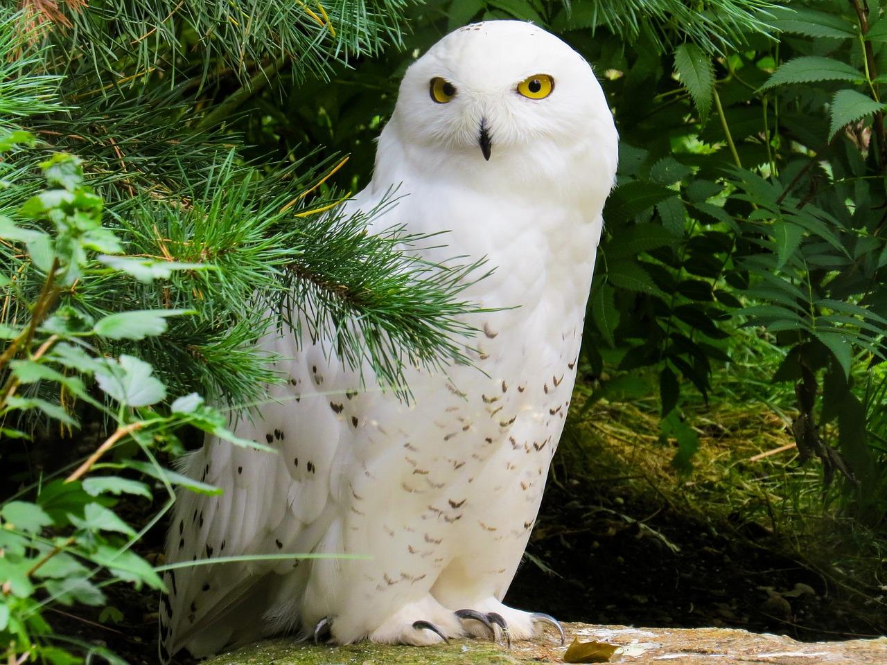 Animal World Bird Owl Free Photo On Pixabay