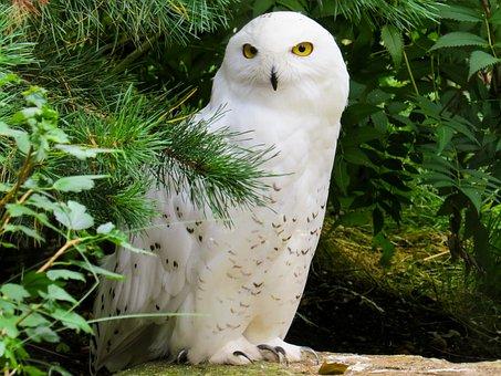 Animal World, Bird, Owl, Plumage