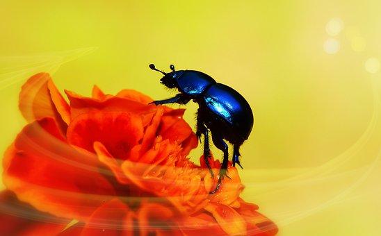 5,000+ Free Beetle & Ladybug Images - Pixabay