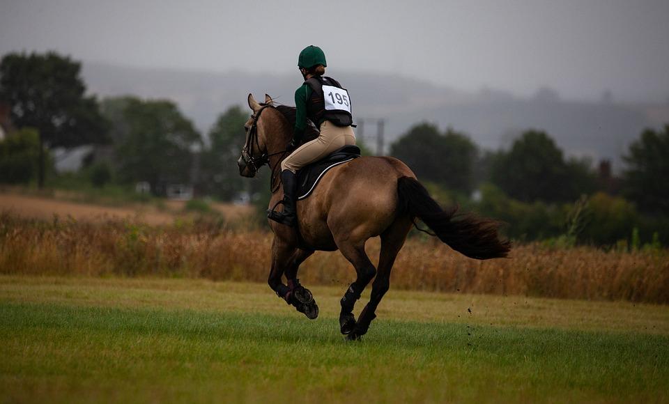 Hest, Galopperende, Galop, Britiske Military, Ridning