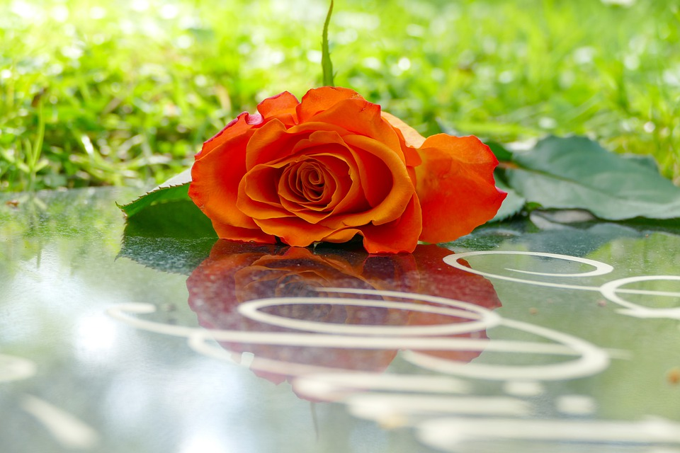 Rosa, Grave, Cimitero, Lutto, Morte, Tombstone, Natura