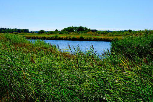 88 Gambar Pemandangan Rumput Ilalang Paling Hist