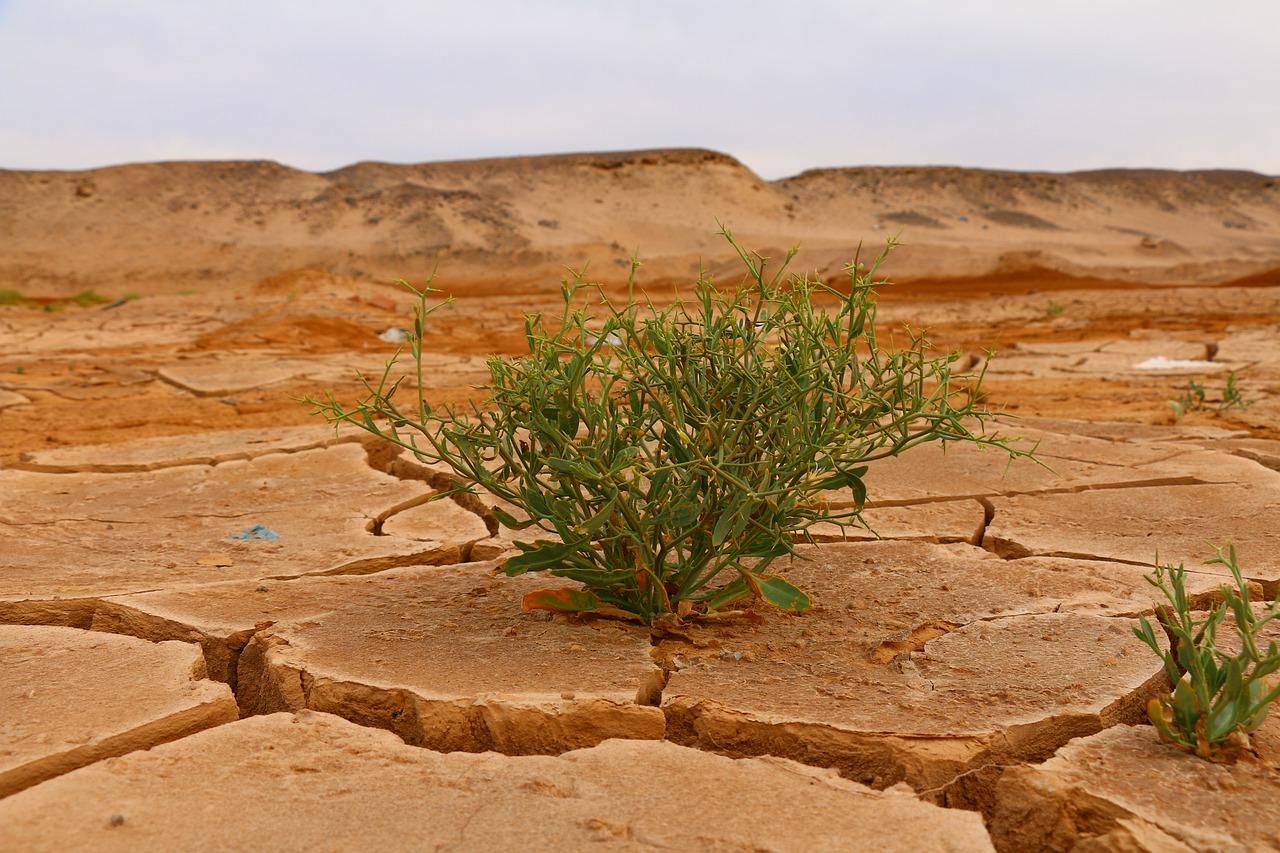Klimawandel als Fluchtursache