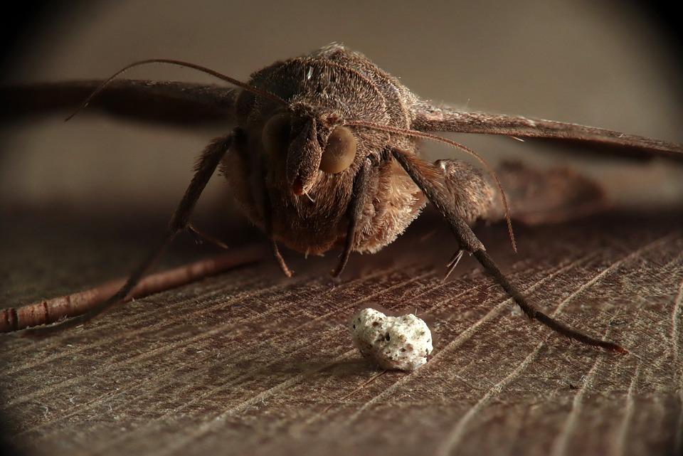 moth-4378908_960_720.jpg