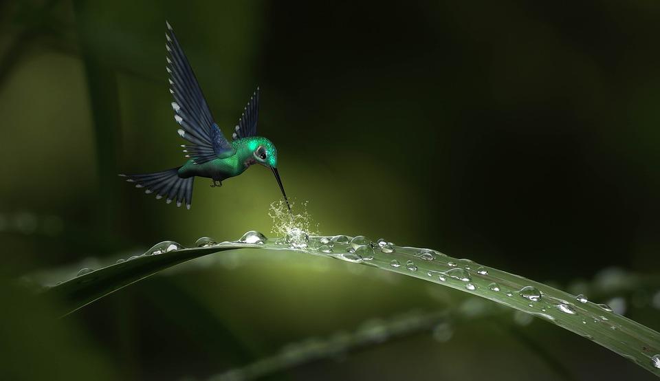 Fantasy, Drip, Hummingbird, Rain, Leaf, Creative