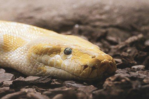 200+ Free Python & Snake Images - Pixabay