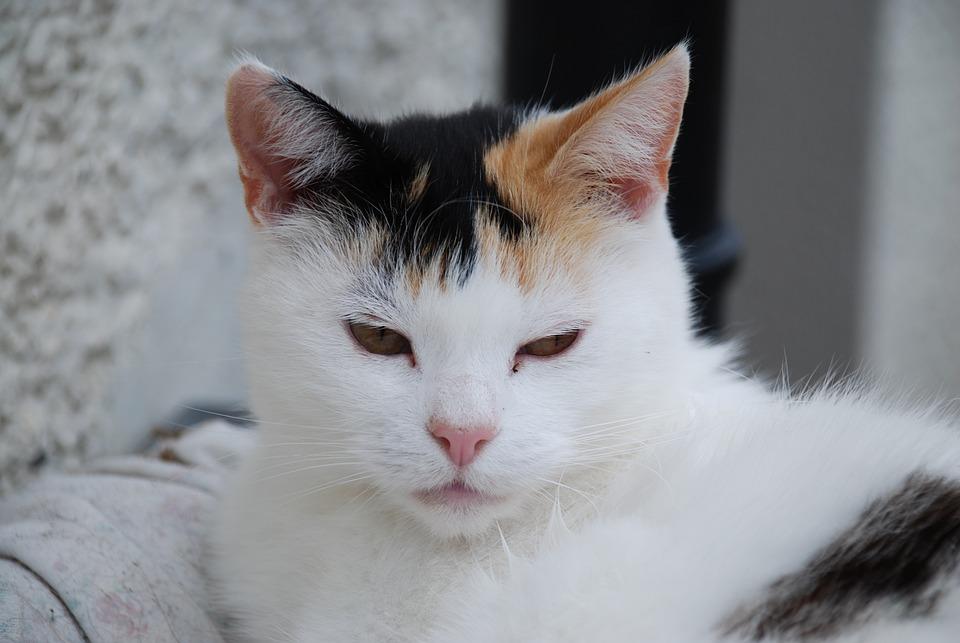 Stáhněte si tento bezplatný obrázek o Kočka Černá Domácí Zvíře z rozsáhlé knihovny společností Pixabay, která obsahuje obrázky a videa z.