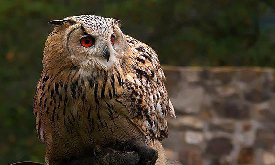 2,000 High-Quality Owl Pictures & Images [HD] - Pixabay