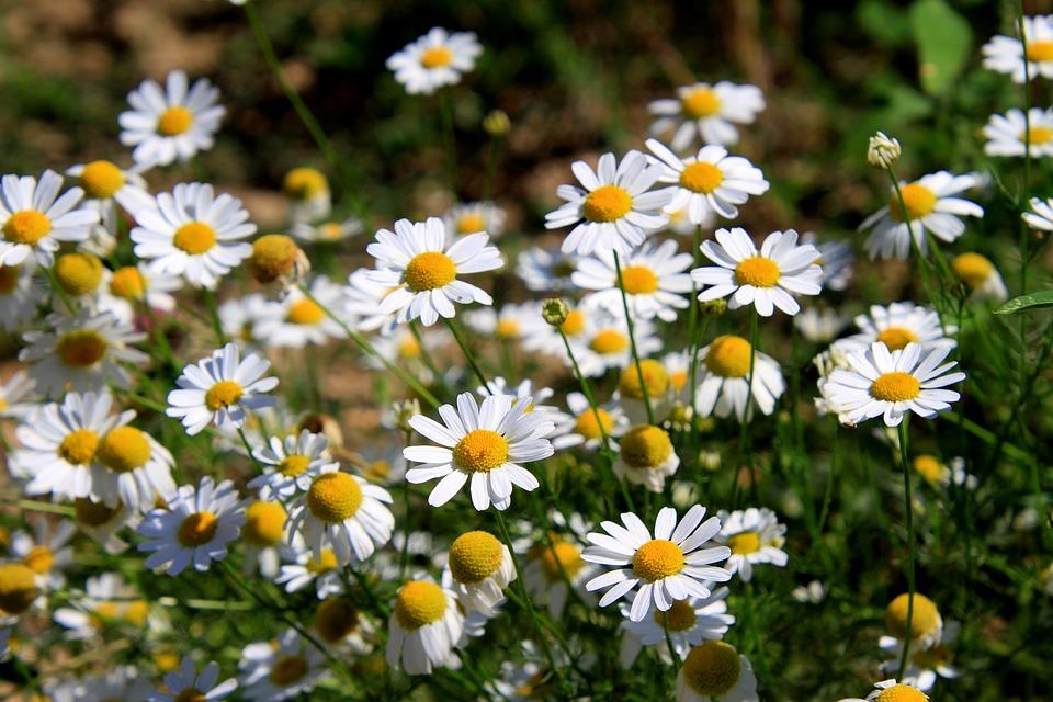 第一会所春暖花开