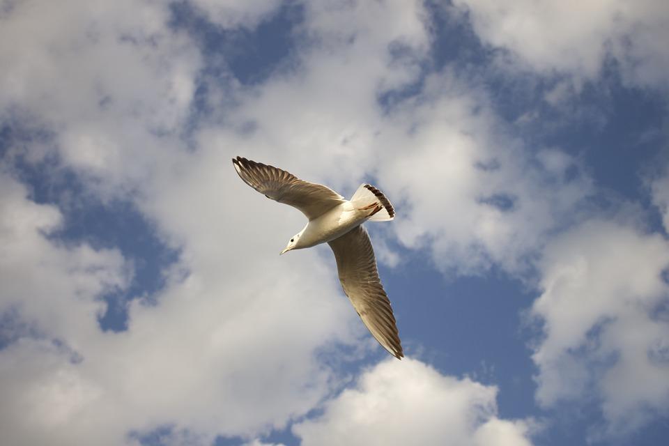 Αποτέλεσμα εικόνας για bird