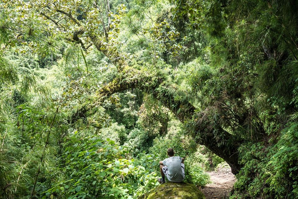 Gwatemala, Las, Natura, Turystyki, Drzewa, Bujne