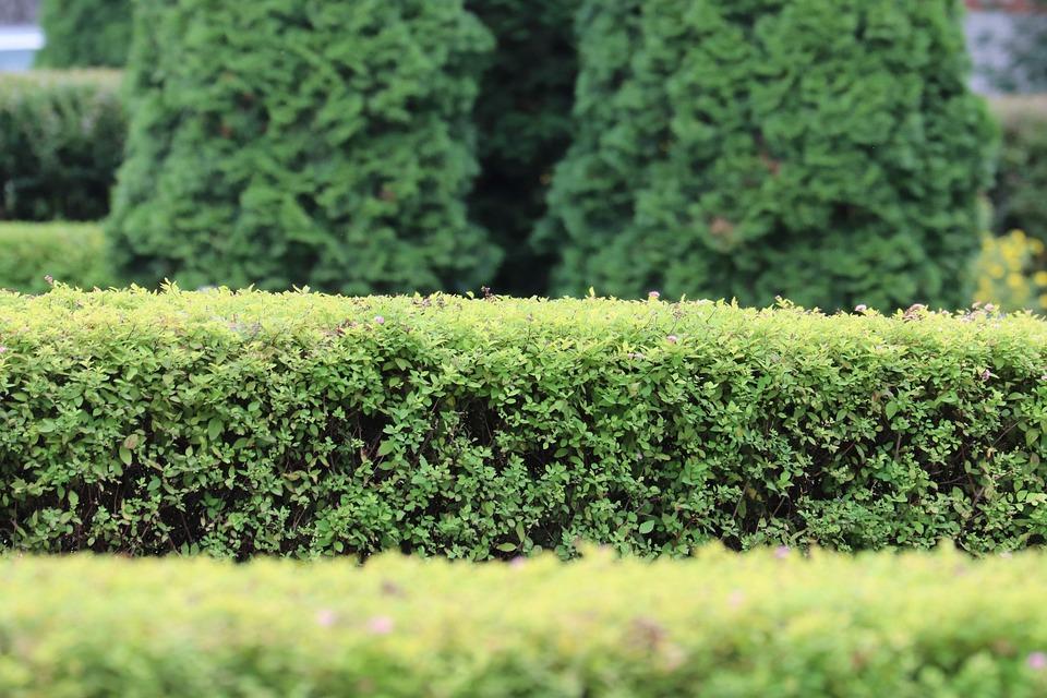 Erythroxylaceae Bush Garden , Free photo on Pixabay