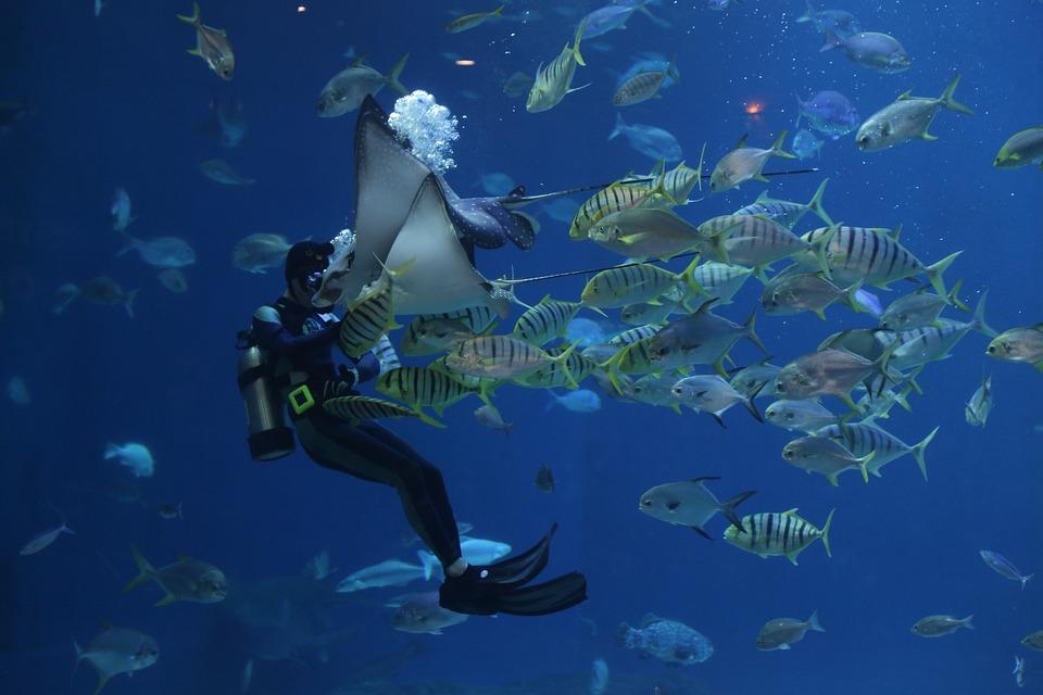 Stingray, Plongée sous-marine, Plongeurs, Aquarium, Waterworld, Mer