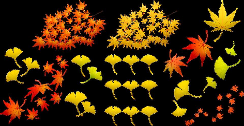 Frunze De Toamna Natura Colorat Imagine Gratuită Pe Pixabay