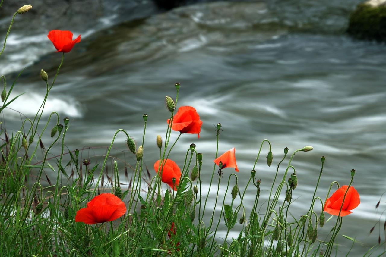 красивое фото картина маки в воде соотношение