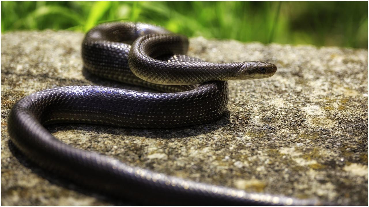 глаза каждого змеи в городе фото каркасных царговых дверных