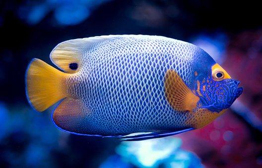 Unduh 9800 Koleksi Download Gambar Ikan Koi Bergerak HD Terpopuler