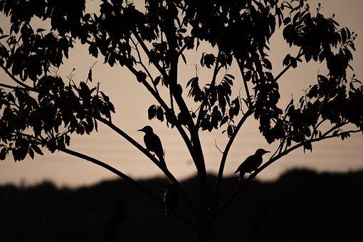 Birds, Tree, Animals, Silhouette, Nature