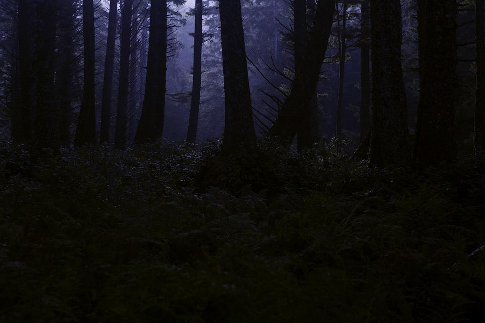 Dark Forest Creepy Woods Woodland Free Photo On Pixabay