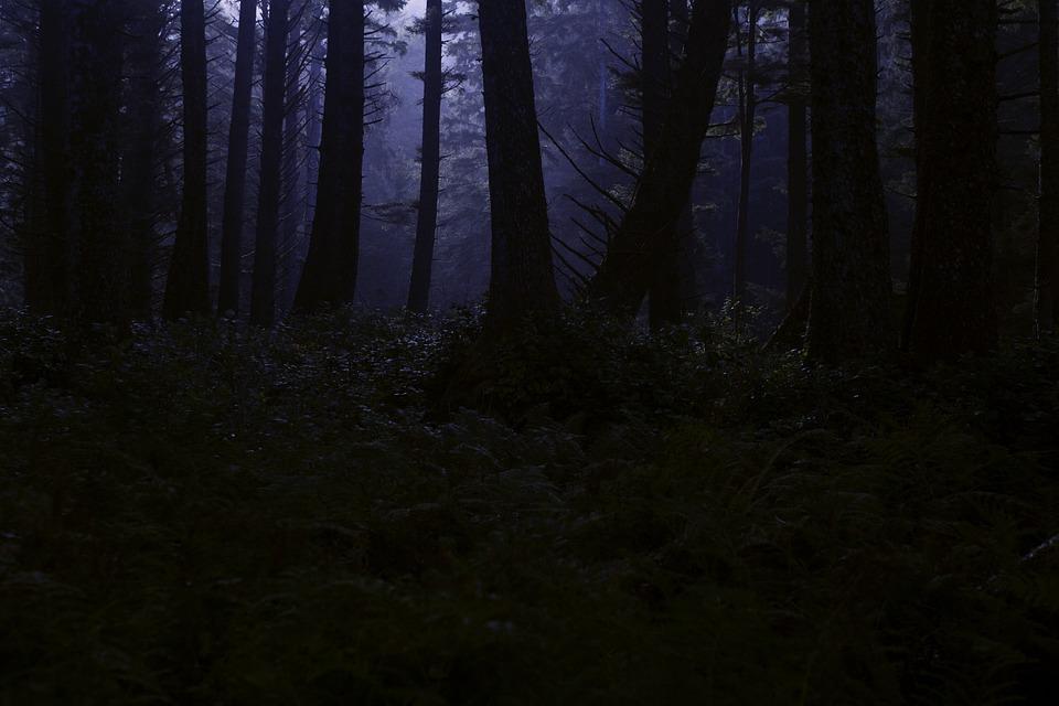 forest-4395986_960_720.jpg