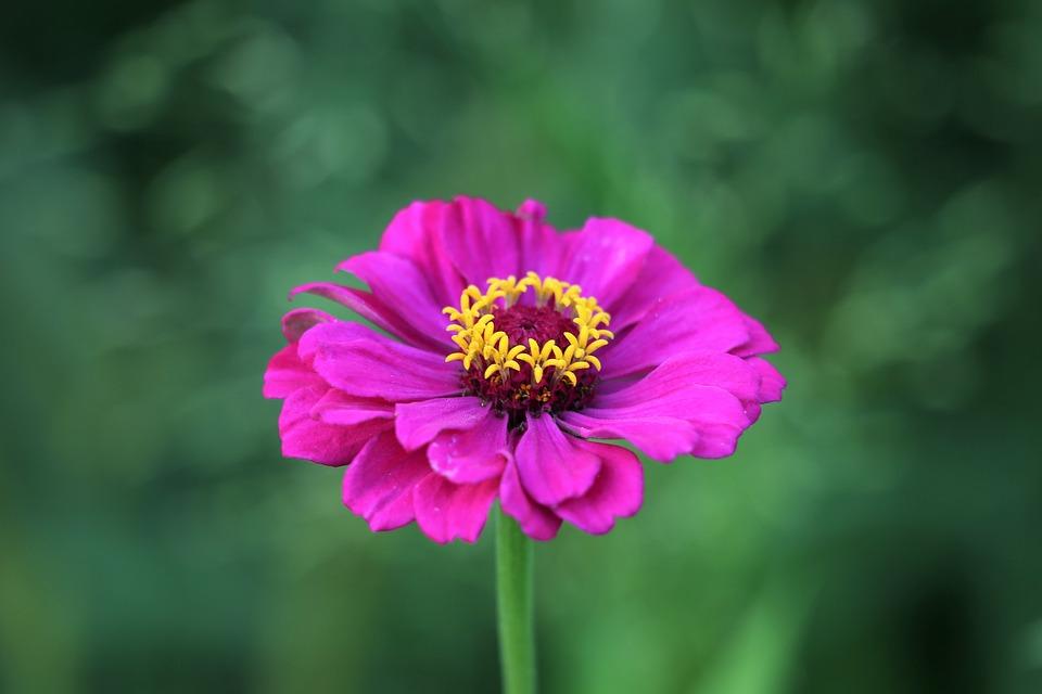 宇都宫紫苑无码在线