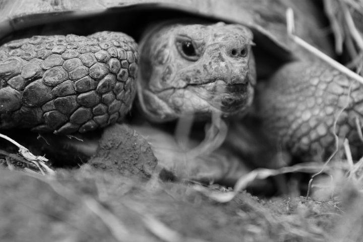 картинки черепаха из м фото кровать нужно ставить