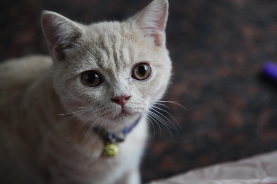 Pěkná africká kočička