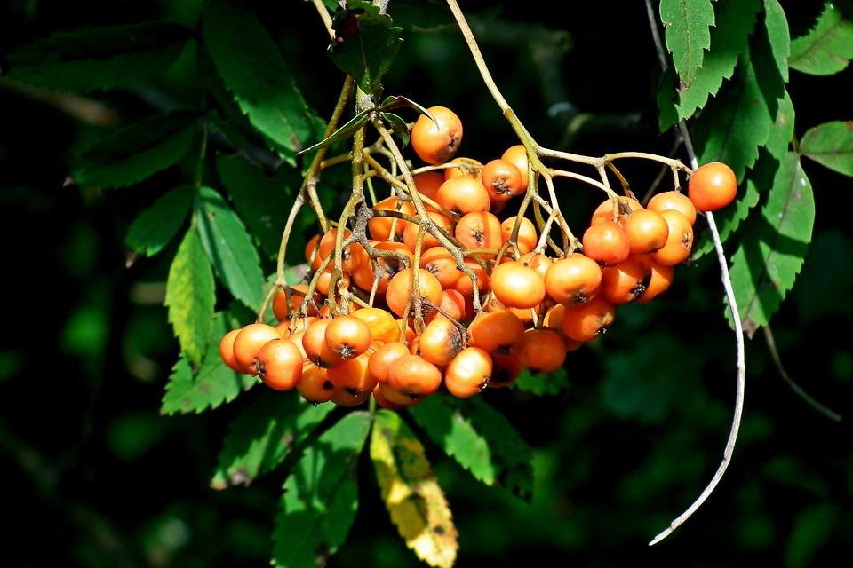 水莓自拍网
