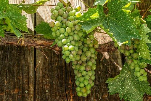 葡萄, フルーツ, 緑, ハンギング, ブドウ葉, つる, レブストック