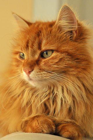 kitten-4403574__480.jpg