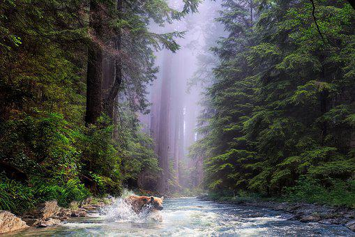 California Forest, Nature, Tree, Landscape, Redwood