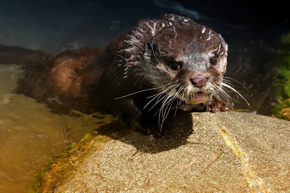 新北衛生局鮑魚類抽驗  2件檢出動物用藥