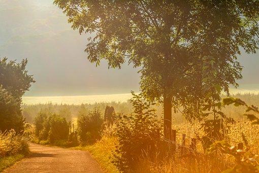 夜明け, ヘイズ, 地上の霧, Nebelschleier, フィールド