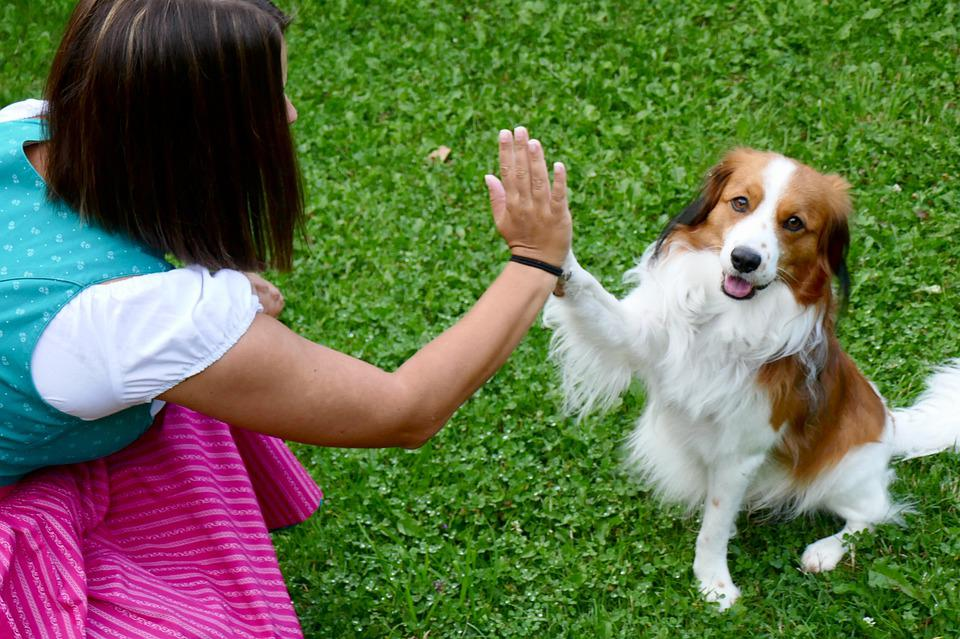 dog giving Hi-Five to a women