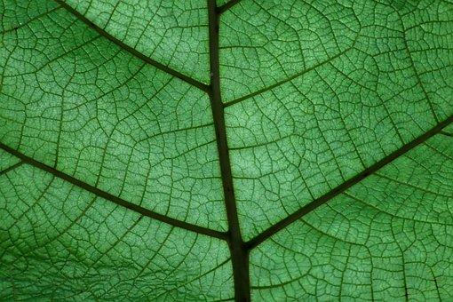 葉, 植物, 構造, バック グラウンド, 緑, 色, 塞ぎます, パターン