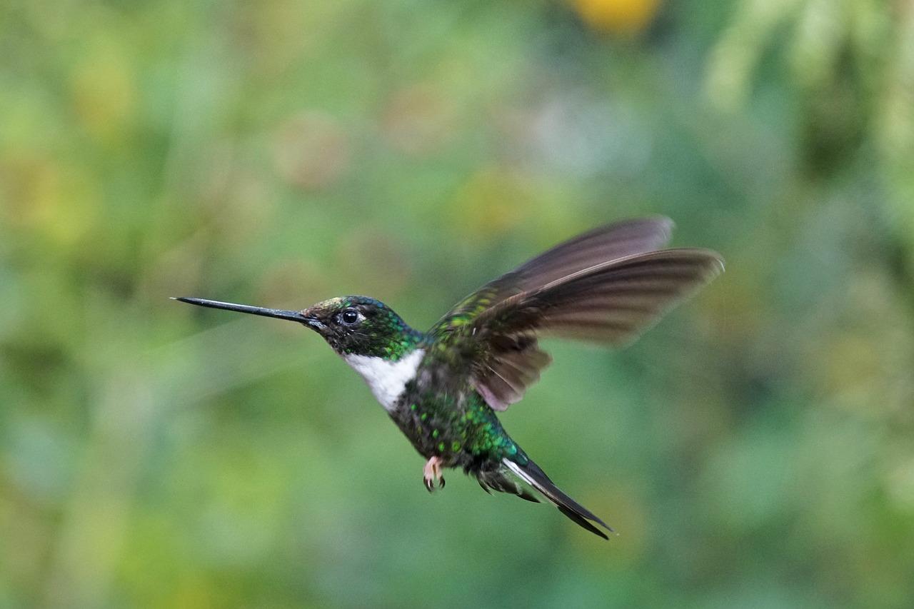 важно, колибри описание птицы это самая выдающаяся