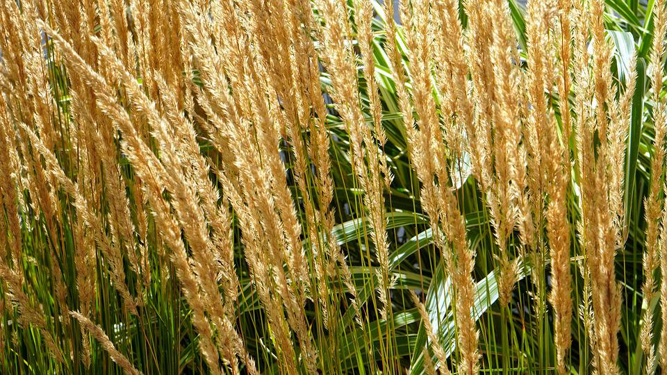 草, 草の葉, 自然, 牧草地