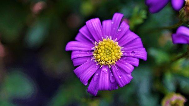 背景, パターン, フローラル, 紫, 黄色, 緑, 花, 美容室, 愛, 魅惑