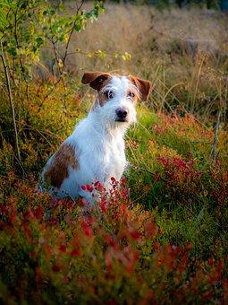 dog-4417897__340.jpg