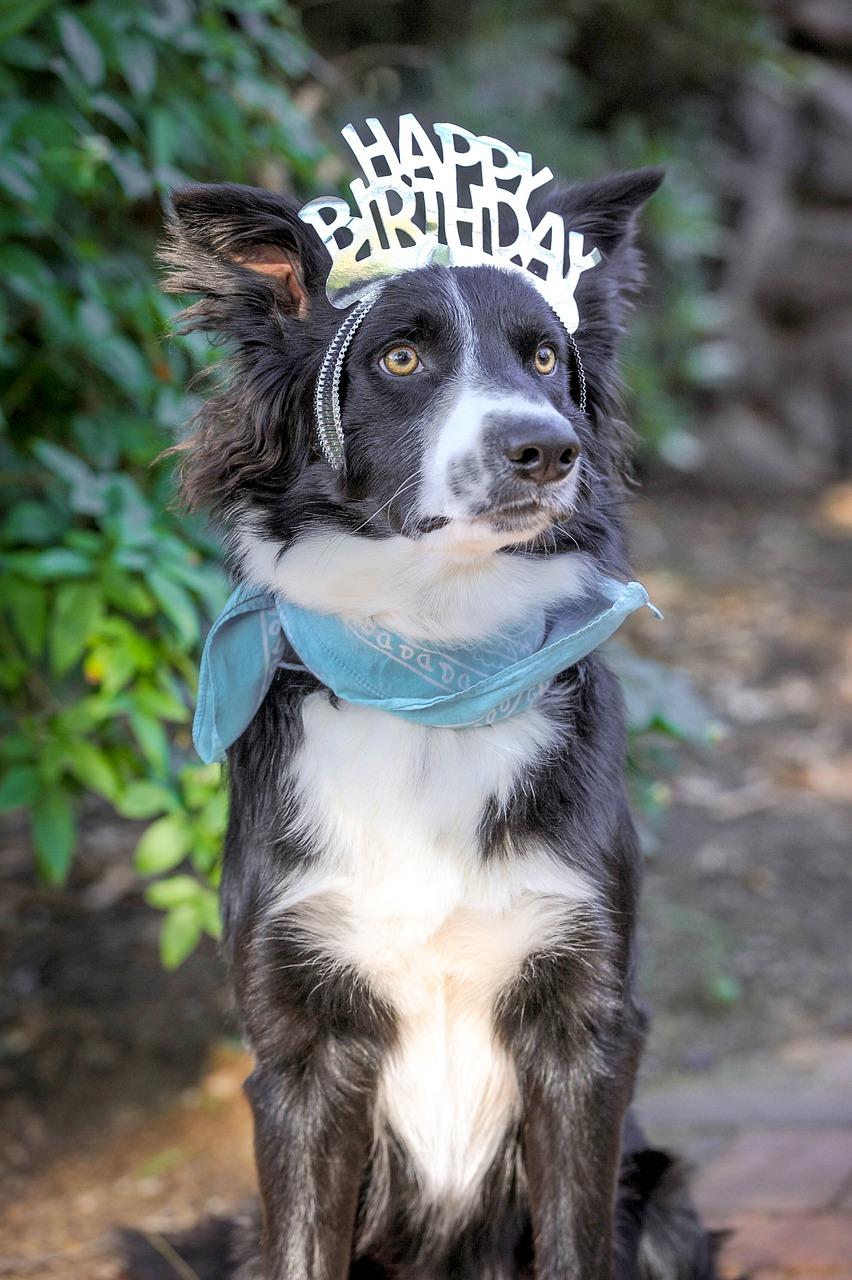 Happy Birthday Dog Photos